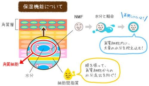 ニキビ研究所